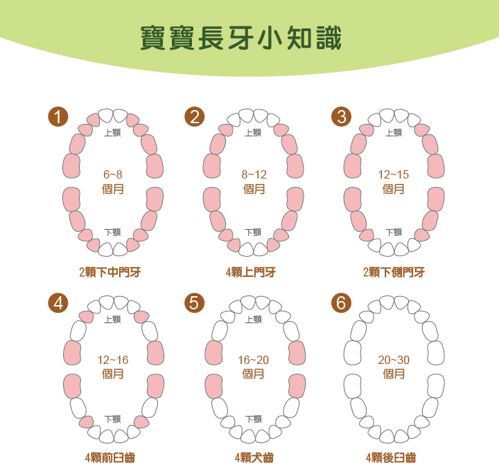 proimages/Baby_care_and_toys/Teether/5484/5484玉米固齒器-8.jpg